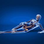 menopause bone loss osteoporosis skeleton